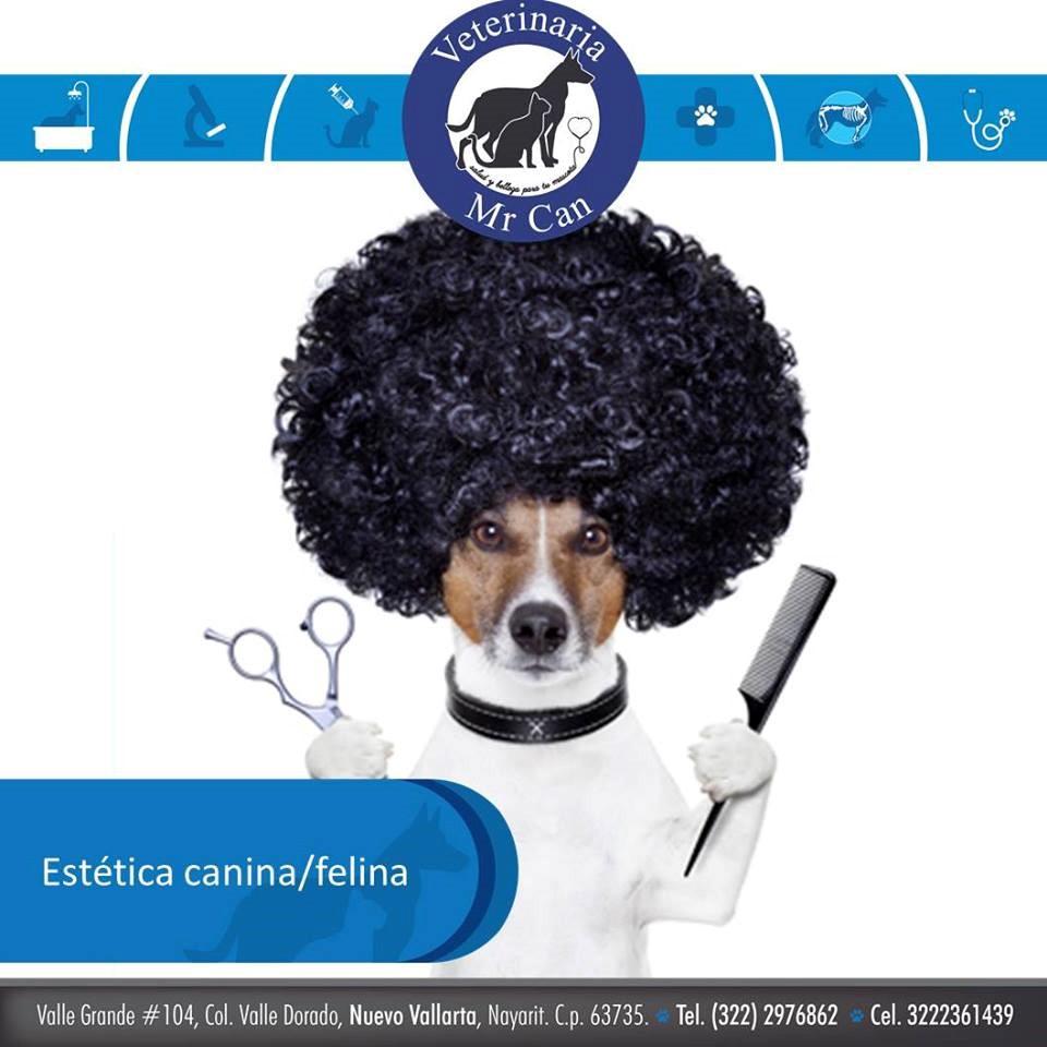 Estética canina en Veterinarias MrCan