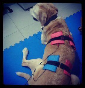 fisioterapia para perros en Veterinarias Mr Can