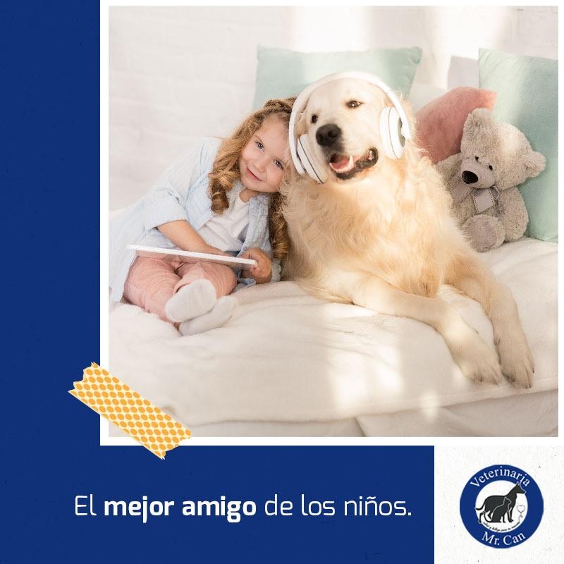Pensión para perros en Veterinaria Mr. Can