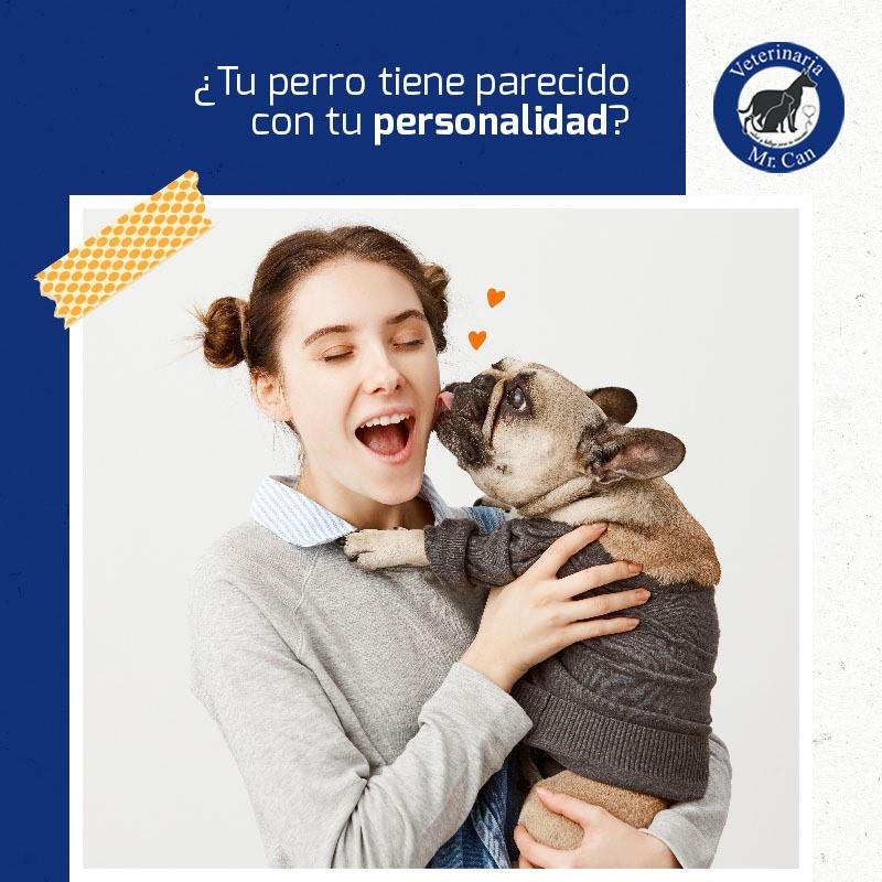 oftalmología veterinaria en Veterinaria Mr. Can
