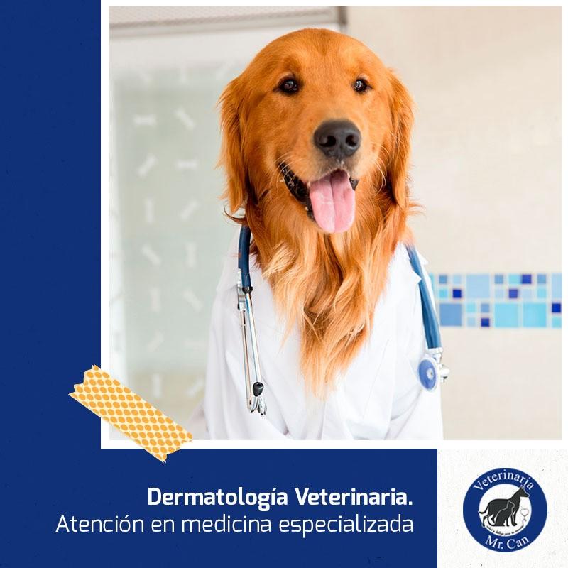 dermatología veterinaria especializada en Mr. Can