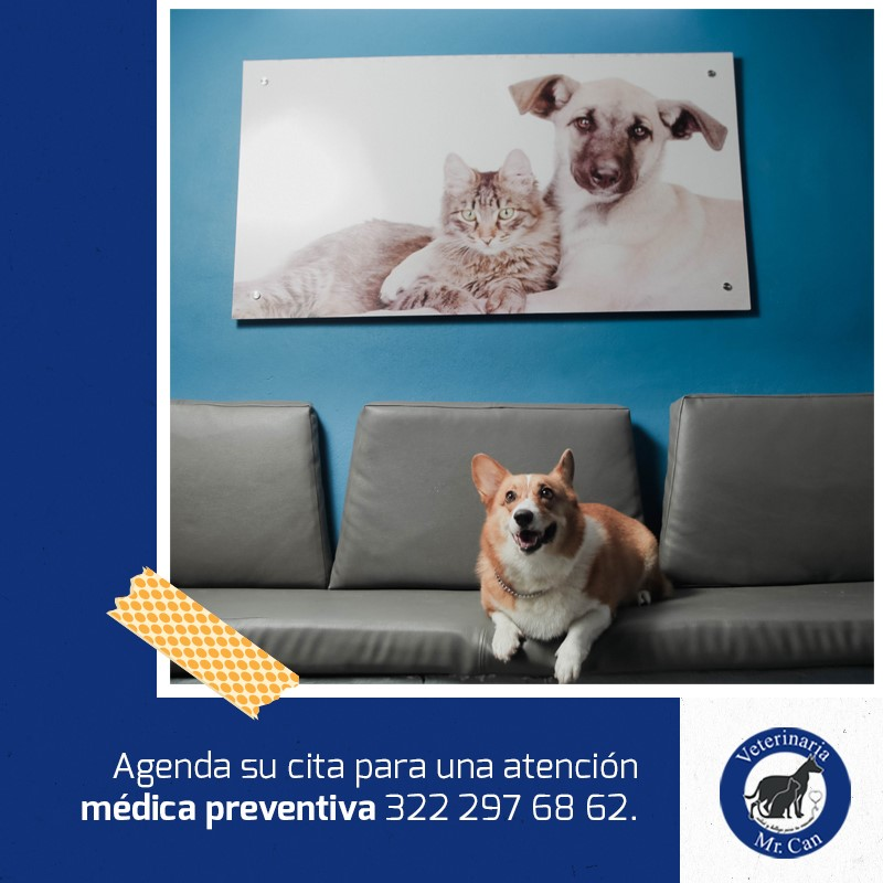 la fisioterapia veterinaria en Mr. Can