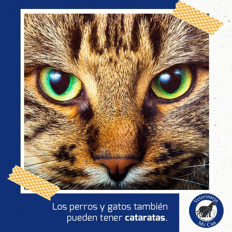 Oftalmología veterinaria en Mr. Can