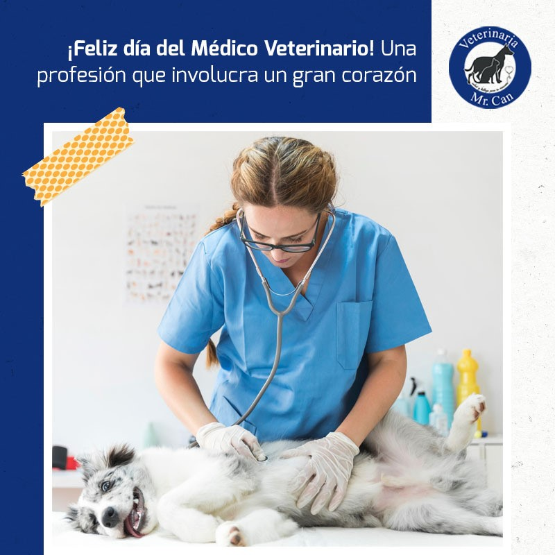 emergencias veterinarias en Mr Can