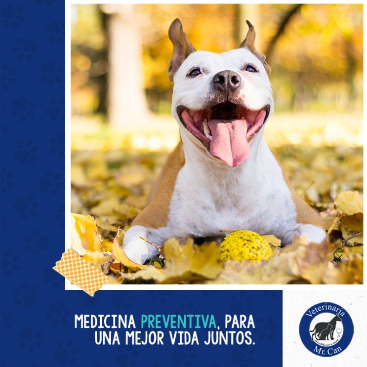 Mr. Can, Adiestramiento canino