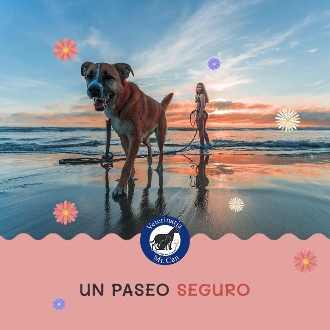 veterinarias en Puerto Vallarta