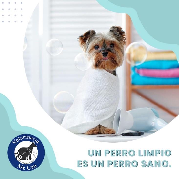 un perro limpio es un perro sano