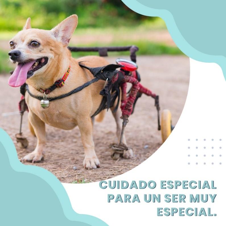 Cuidado especial para uns er especial, fisioterapia veterinaria