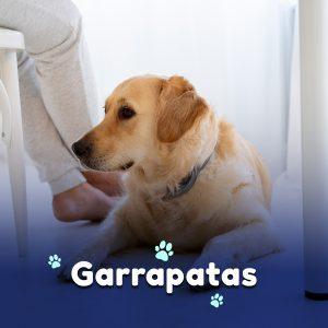 ¡Ayuda, mi perro tiene garrapatas!
