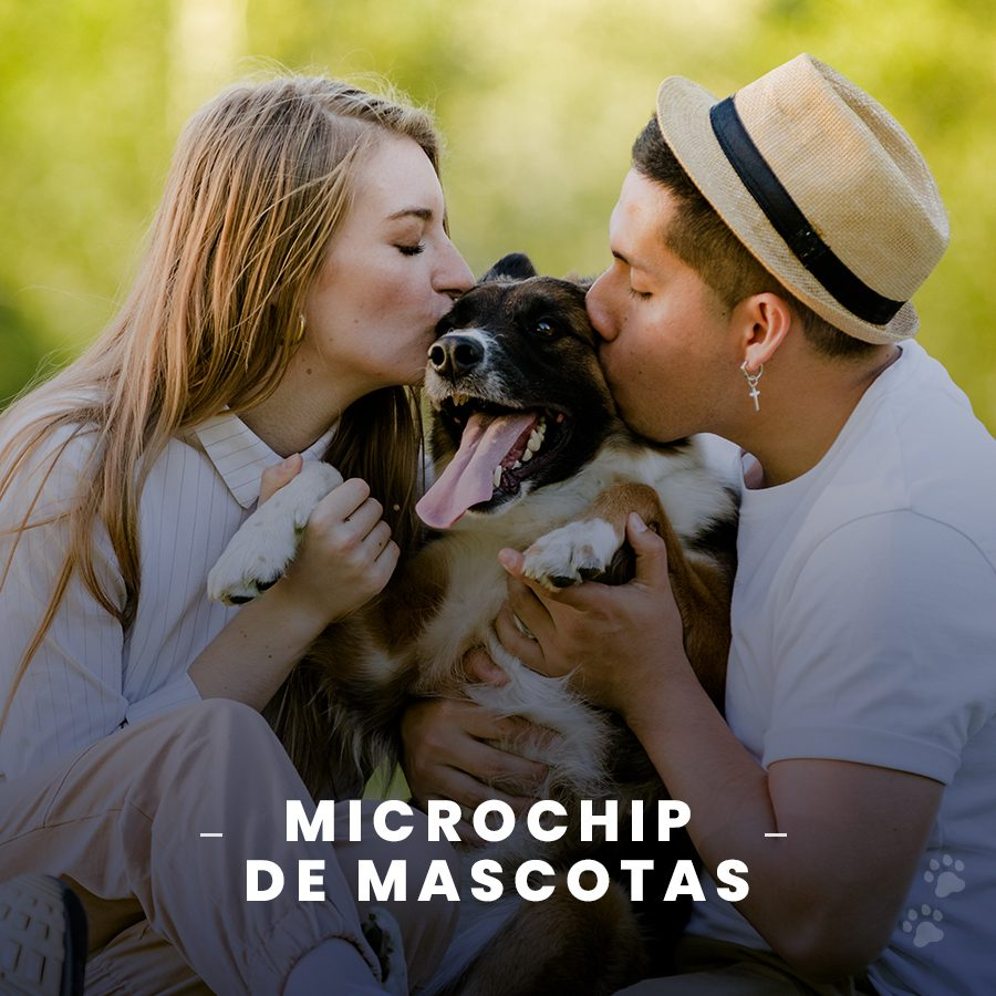 Microchip para mascotas